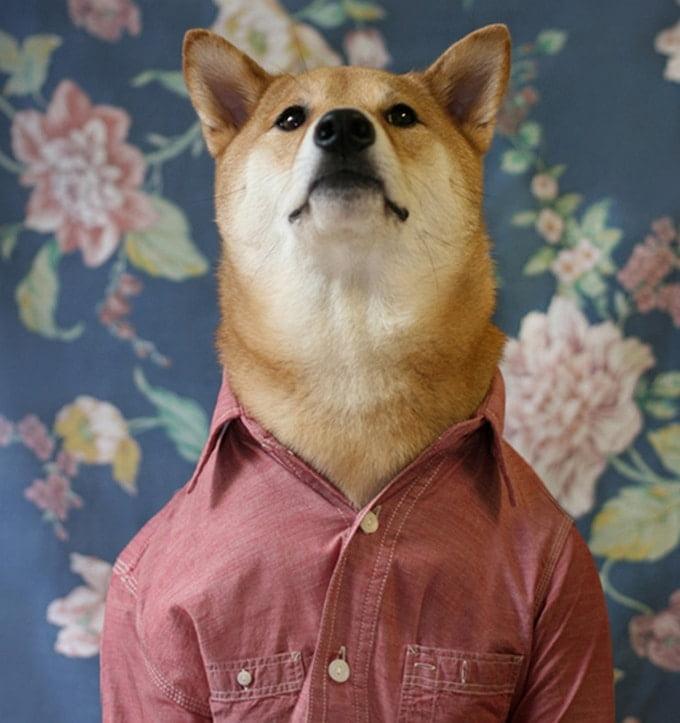 MenswearDog - Cachorro que dá dicas de moda - HQSC 1 (2)
