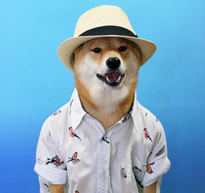 MenswearDog - Cachorro que dá dicas de moda - HQSC  2