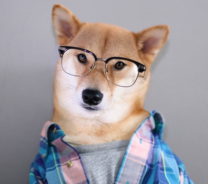 MenswearDog - Cachorro que dá dicas de moda - HQSC 4