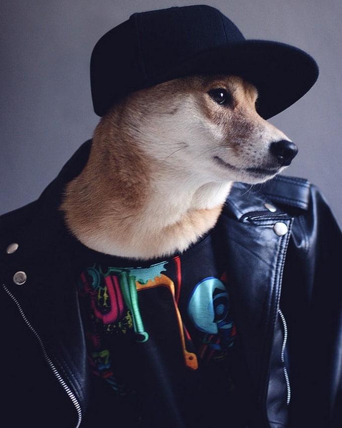 MenswearDog - Cachorro que dá dicas de moda - HQSC 6