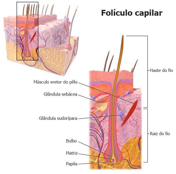 fio folículo e transplante capilar masculino